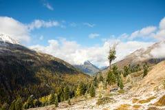 Vieil arbre dans les montagnes Photo stock