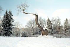 vieil arbre de chêne très Photographie stock libre de droits
