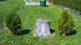 Vieil arbre de coupe dans le domaine Photo stock