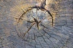 Vieil arbre de coupe ronde photo libre de droits