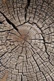 Vieil arbre de coupure Photo stock