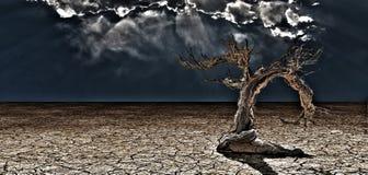 Vieil arbre de désert Image stock