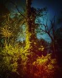 Vieil arbre de nuit orageuse photographie stock libre de droits