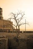 Vieil arbre dont les fonds ont survécu au château Image libre de droits
