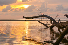 Vieil arbre en mer Image libre de droits