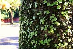 Vieil arbre en stationnement Photographie stock