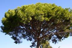 Vieil arbre en stationnement Photographie stock libre de droits