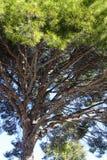 Vieil arbre en stationnement Photo stock