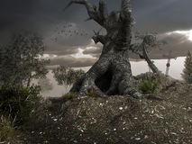 Vieil arbre gnarly Photo stock