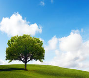 Vieil arbre isolé images libres de droits