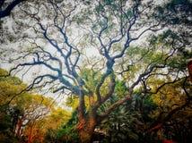Vieil arbre magique Forêt d'automne avec des rayons du soleil Image stock