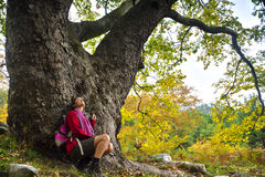 Vieil arbre majestueux Image libre de droits