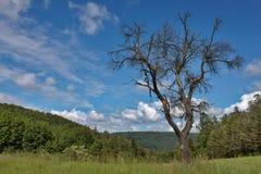 Vieil arbre mort abandonné dans le pré Photos libres de droits