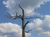 Vieil arbre mort contre les nuages et le ciel bleu photos stock