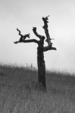 Vieil arbre mort qui a survécu à beaucoup de tempêtes de montagne Photographie stock libre de droits