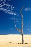 Vieil arbre mort sec dans un désert Image stock