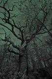 Vieil arbre mystérieux Photos libres de droits