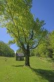 Vieil arbre par et vieille carlingue photos stock