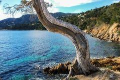 Vieil arbre près du bord de la mer Photo stock