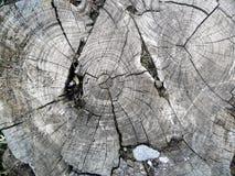 Vieil arbre réduit Image libre de droits