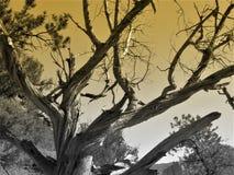 Vieil arbre rocailleux images stock