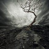 Vieil arbre sec Photo libre de droits