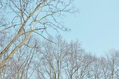Vieil arbre sec avec le ciel bleu d'automne Image stock