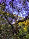 Vieil arbre sous le pont photo stock