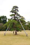 Vieil arbre soutenu photos libres de droits