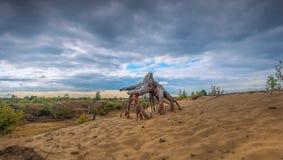 Vieil arbre sur Moorland Images libres de droits
