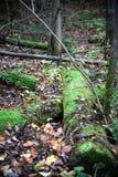 Vieil arbre tombé photographie stock