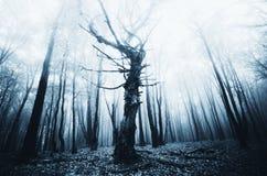 Vieil arbre tordu foncé dans la forêt hantée image libre de droits