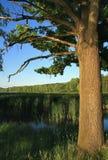 Vieil chêne-arbre Photo libre de droits