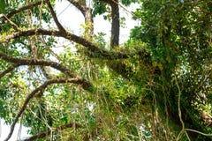 Vieil en bois dans la jungle du fond de la Thaïlande photo stock