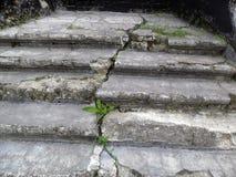 Vieil escalier Photo stock