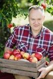 Vieil homme avec Apple dans le champ de pommiers Image stock