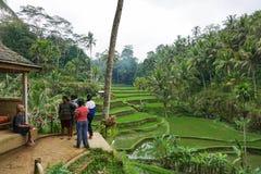 Vieil homme avec des enfants dans des domaines de riz sur la montagne près d'Ubud, île tropicale Bali, Indonésie, Tegallalang photo stock