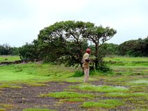 Vieil homme avec le bâton gardant la nature dans la vallée photos libres de droits
