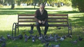 Vieil homme calme s'asseyant sur le banc en parc et les pigeons de alimentation, solitude dans la vieillesse banque de vidéos