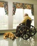 Vieil homme dans le fauteuil roulant et le crabot Photos stock