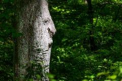 Vieil homme dans le tronc d'arbre Images libres de droits