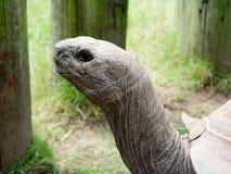 Vieil homme du zoo Photo libre de droits