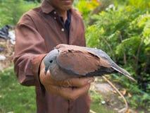 Vieil homme et la colombe Photographie stock