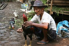 Vieil homme montrant ses combats de coqs principaux photographie stock libre de droits