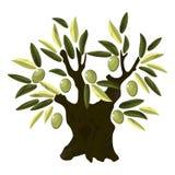 Vieil olivier Photos libres de droits