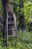 Vieille échelle en bois Image libre de droits