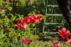Vieille échelle en bois dans le jardin Photographie stock