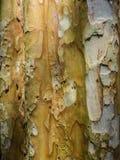Vieille écorce au milieu sauvage Image stock