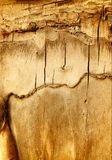 Vieille écorce criquée d'arbre. Images stock