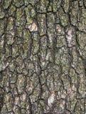 Vieille écorce d'arbre Photographie stock